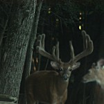 Lowlands_Whitetails_Deer_Hunting_Ranch_7524
