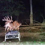 Lowlands Whitetails New York Deer Hunting Ranch
