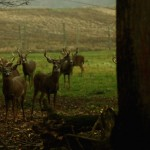 Visit Lowlands Whitetails Hunting Ranch in New York
