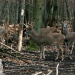 Visit Lowlands Whitetail Hunting Ranch in New York
