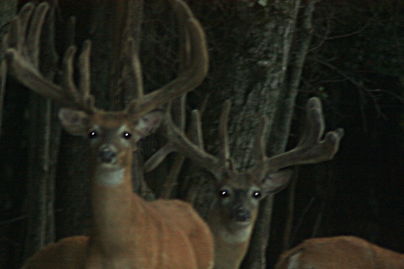 Lowlands Whitetails Deer Hunting Ranch 7618